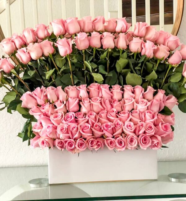 100  Pink roses standing
