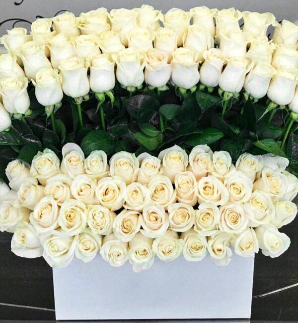 100  Standing white roses