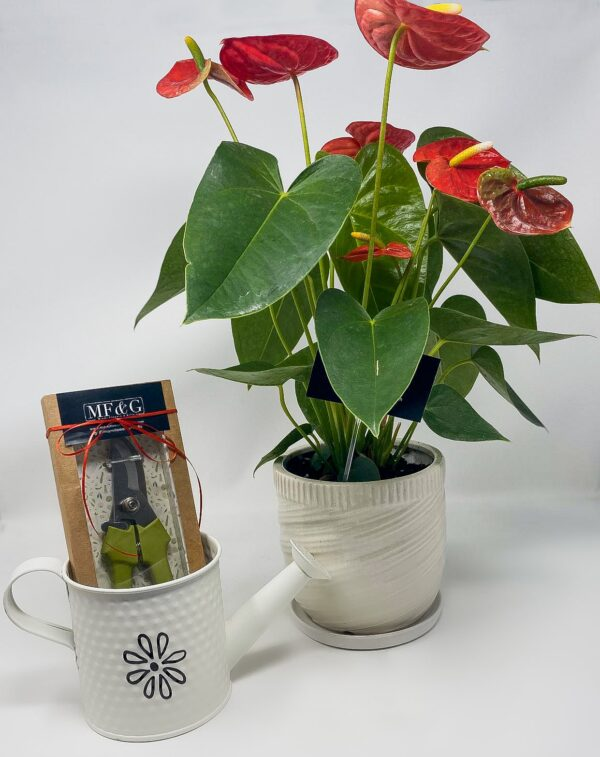 grower plant set