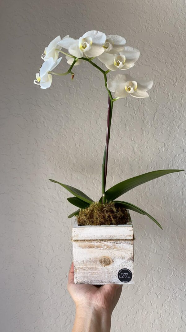single orchid - mothers day