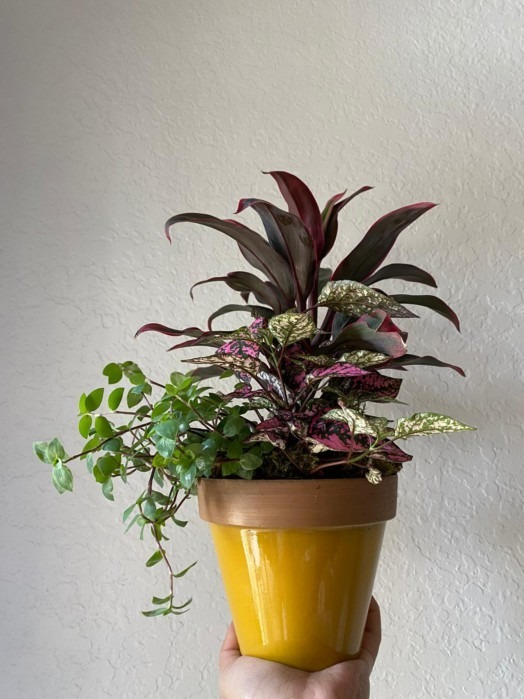 Toasted garden plant - mothers day