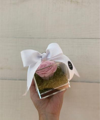 Single preserved rose